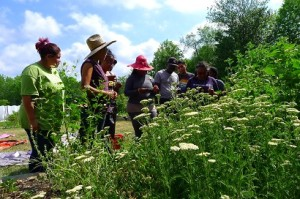 Culinary and medicinal herbs workshop at Black and Latino Farmers Immersion